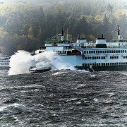 clinton mukilteo ferry cams