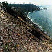 whidbey island zip code