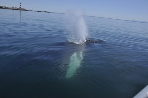 Whidbey Island Whale Watching